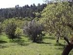 landFH: Land for sale in  - Riopar